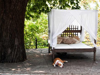 Olive Villa Rentals - Pelion- Aphrodite's Mansion.8